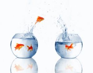 fishjump